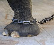 elephant-rop